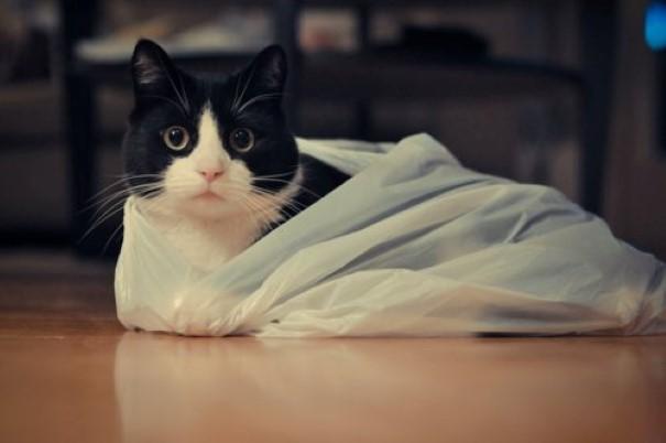 gatos-8