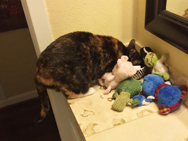 problemas-gatos-1
