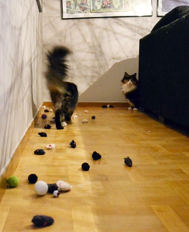 problemas-gatos-11