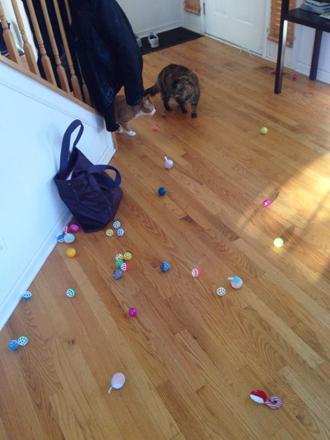 problemas-gatos-12