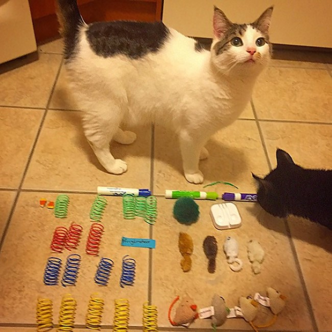 problemas-gatos-13