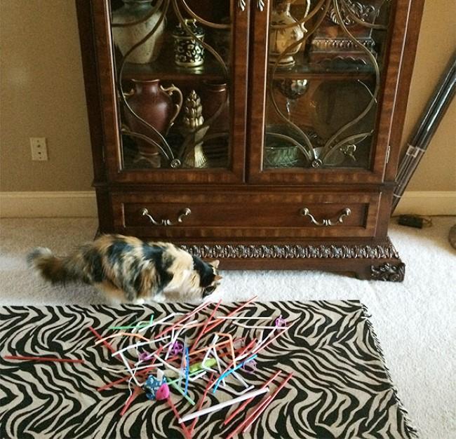 problemas-gatos-14