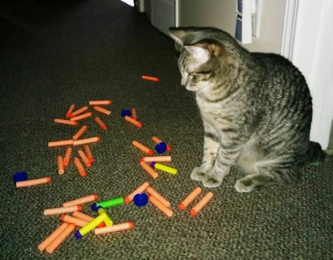 problemas-gatos-15
