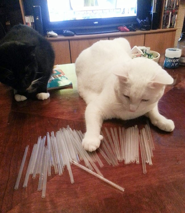 problemas-gatos-16