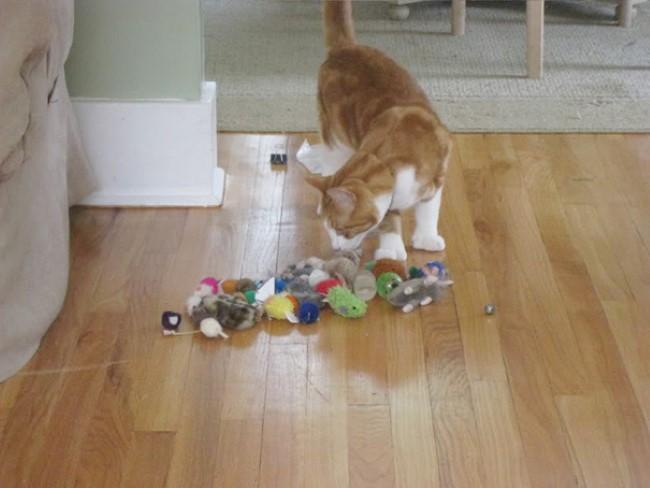 problemas-gatos-18