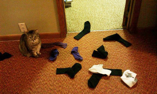 problemas-gatos-19