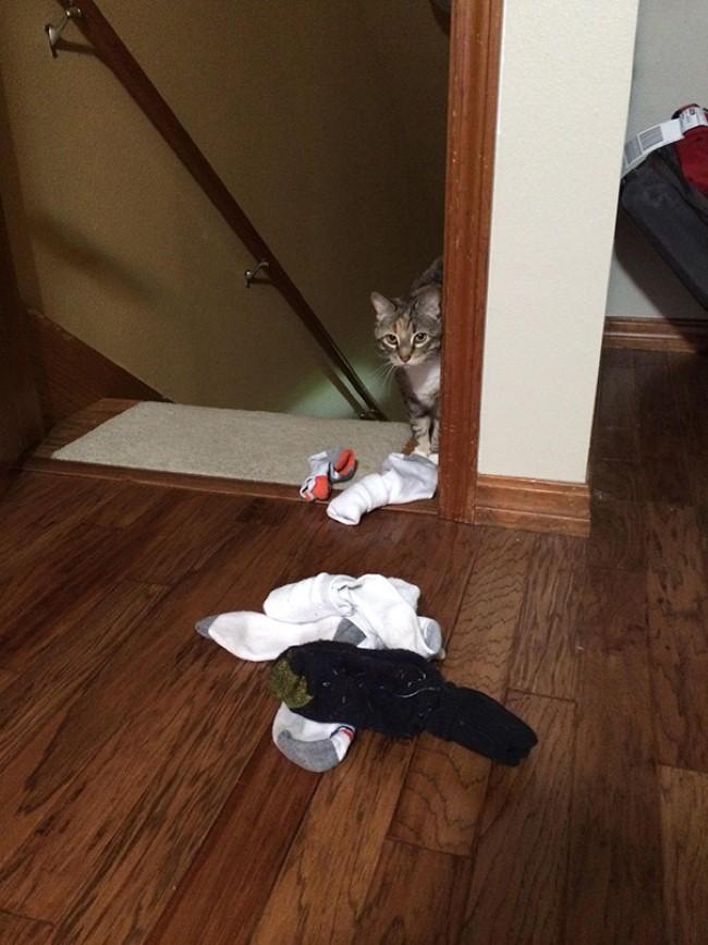 problemas-gatos-2