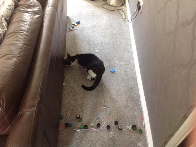 problemas-gatos-20