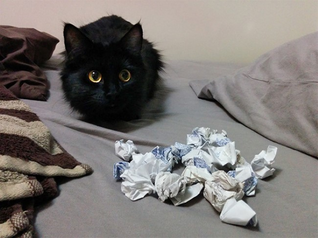 problemas-gatos-3