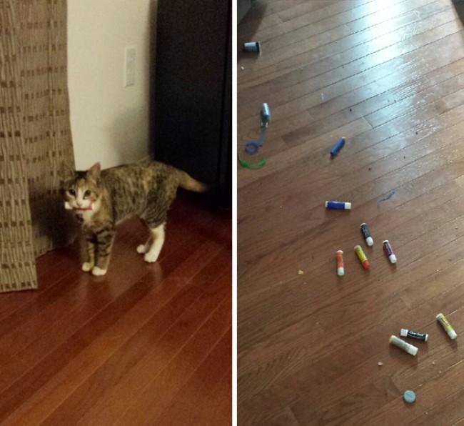problemas-gatos-5