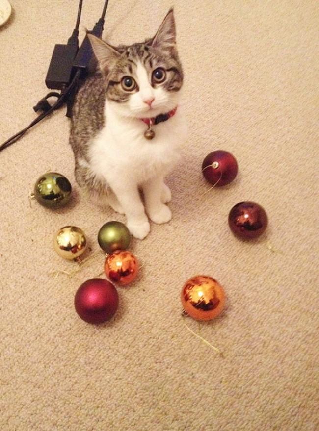 problemas-gatos-7