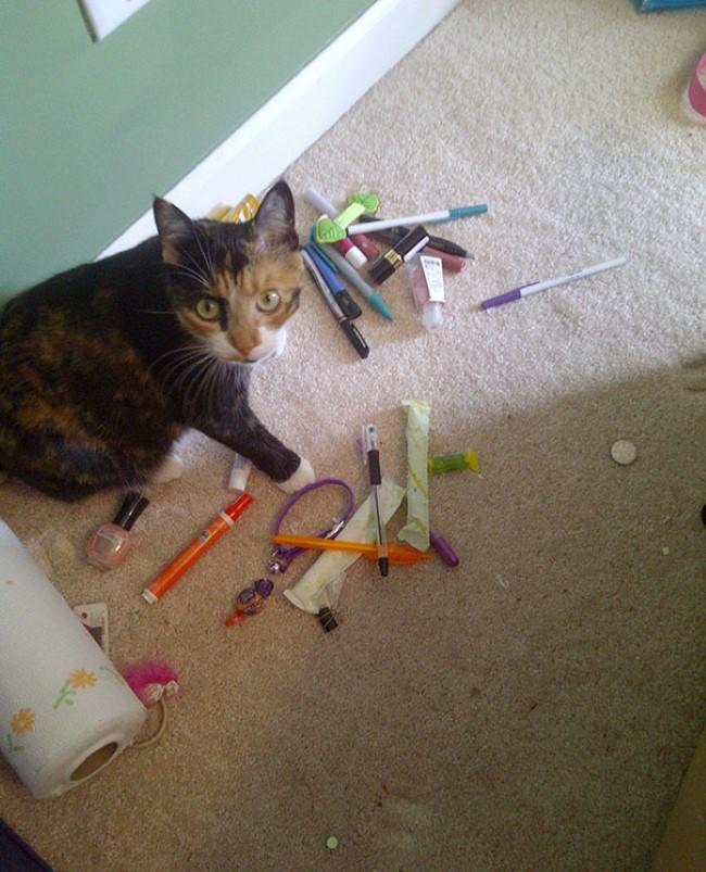 problemas-gatos-8