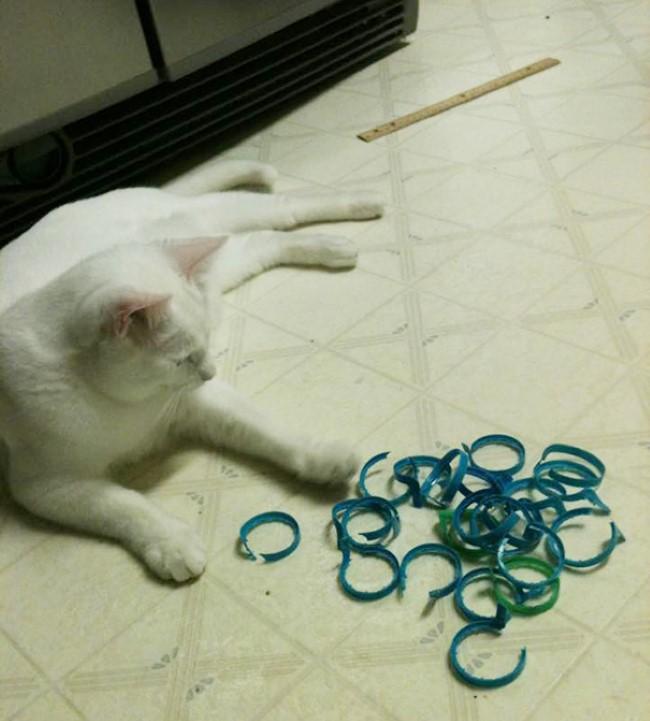 problemas-gatos-9
