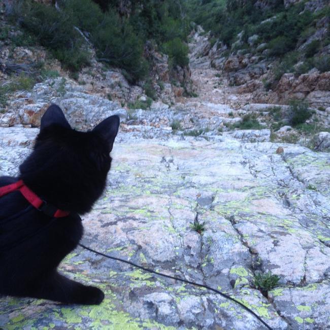 Gata_Alpinista_13