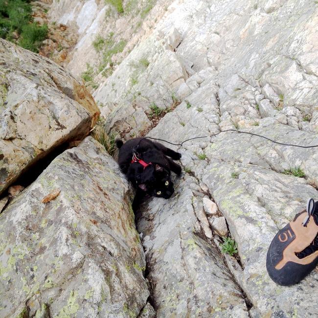 Gata_Alpinista_14