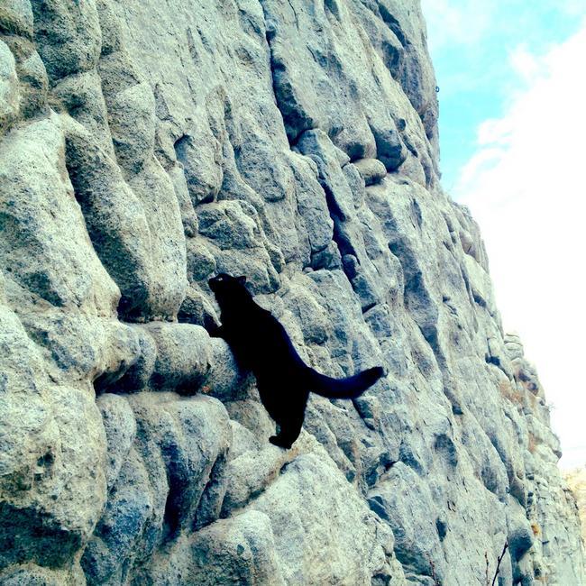 Gata_Alpinista_8