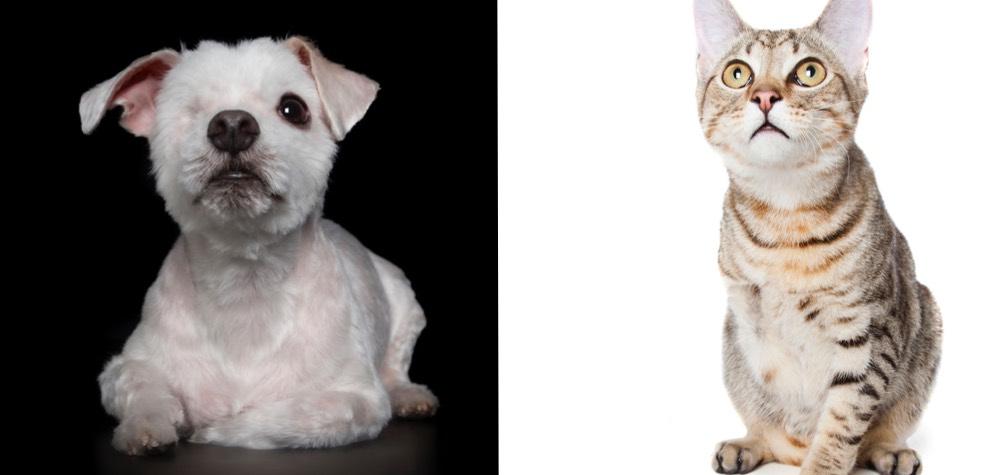 Imperfeição perfeita   Ensaio mostra a beleza de animais doentes e deficientes
