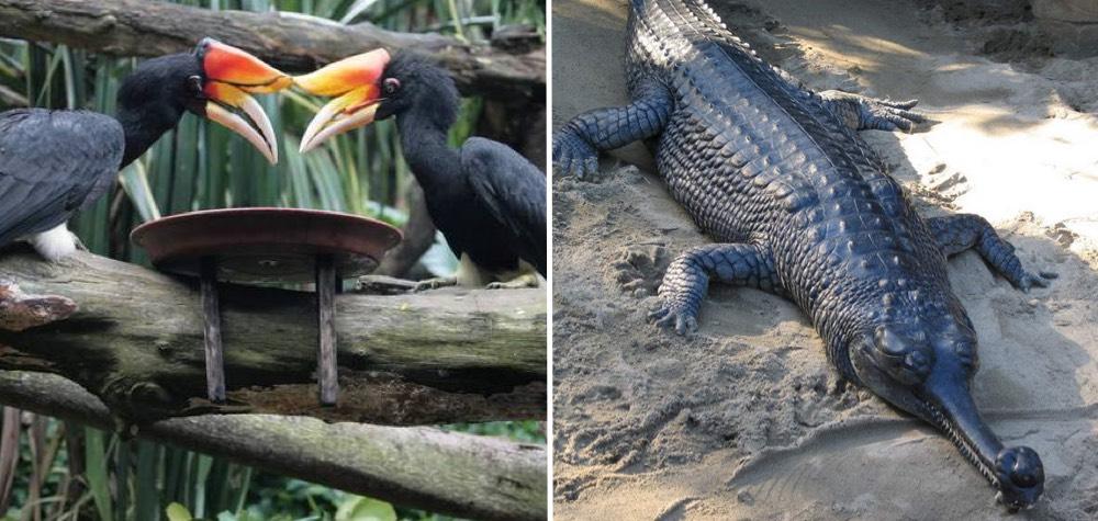 9 Animais interessantes que talvez você nunca tenha ouvido falar
