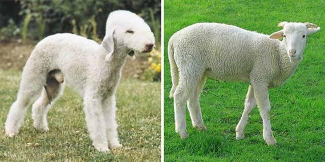 cachorros-que-se-parecem-com-outras-coisas-10