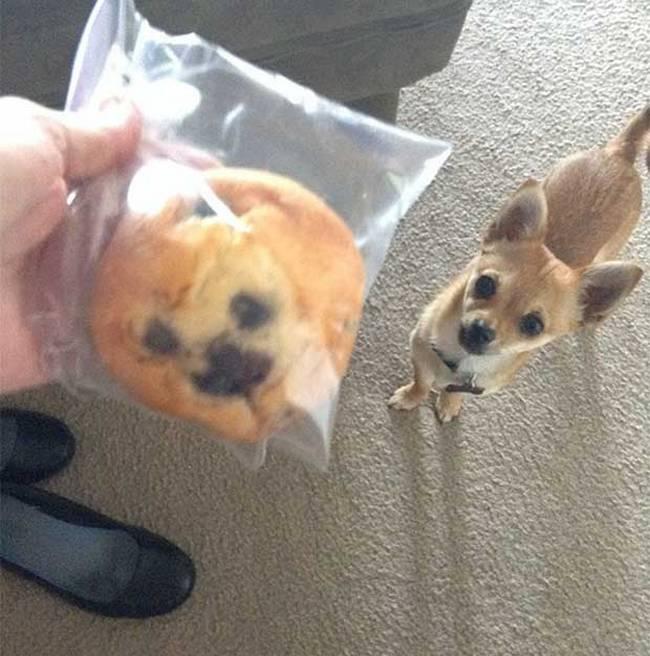cachorros-que-se-parecem-com-outras-coisas-12