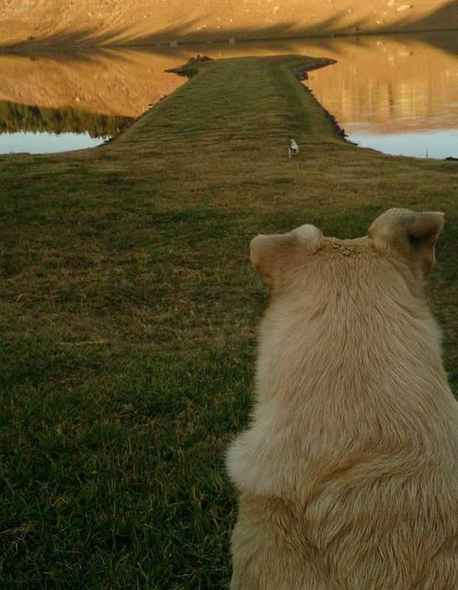 cachorros-que-se-parecem-com-outras-coisas-19