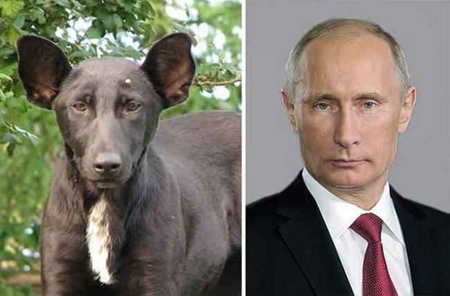 cachorros-que-se-parecem-com-outras-coisas-3