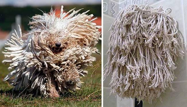 cachorros-que-se-parecem-com-outras-coisas-7