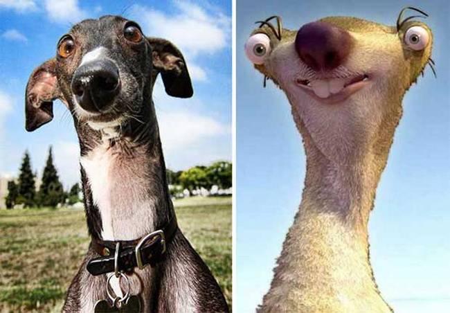 cachorros-que-se-parecem-com-outras-coisas-8