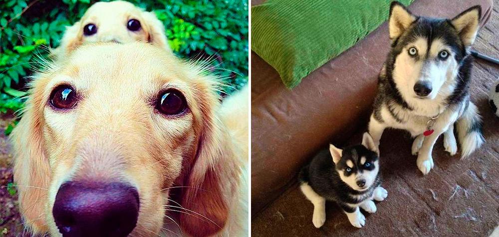 21 Cachorros e suas adoráveis versões mini