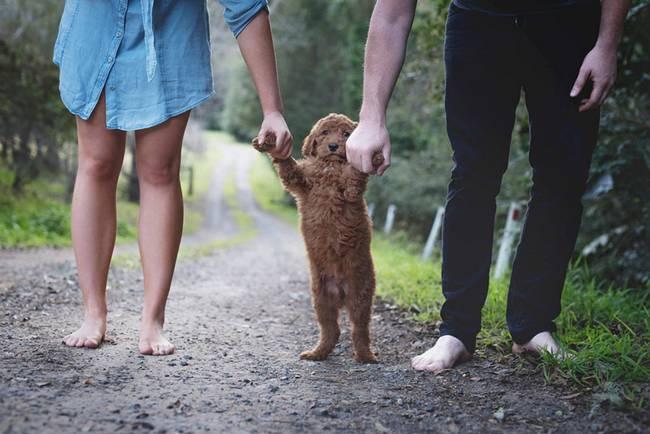 casal-faz-ensaio-fotográfico-com-cachorro-4