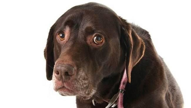 coisas-que-os-humanos-fazem-e-que-os-cachorros-odeiam-1