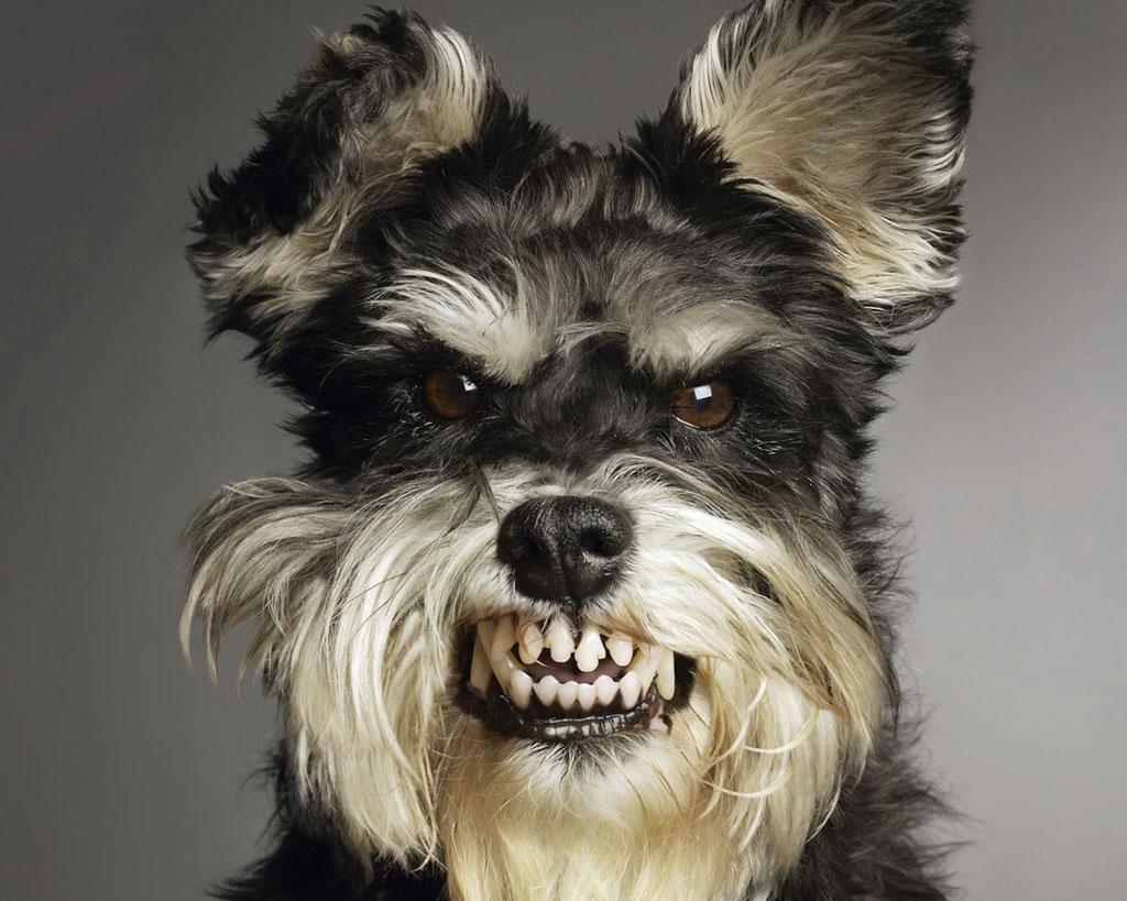 coisas-que-os-humanos-fazem-e-que-os-cachorros-odeiam-4