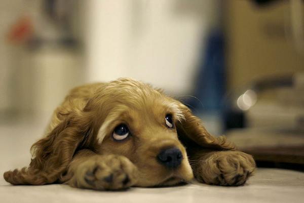 coisas-que-os-humanos-fazem-e-que-os-cachorros-odeiam-5