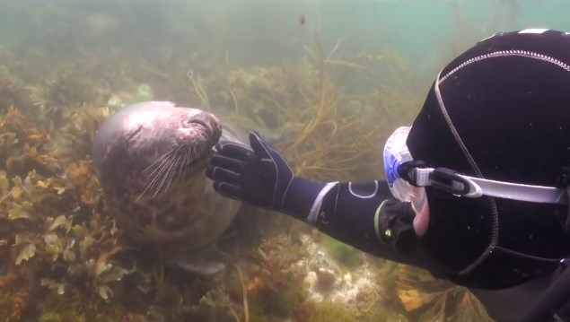foca-carinho-mergulhador-5 (2)