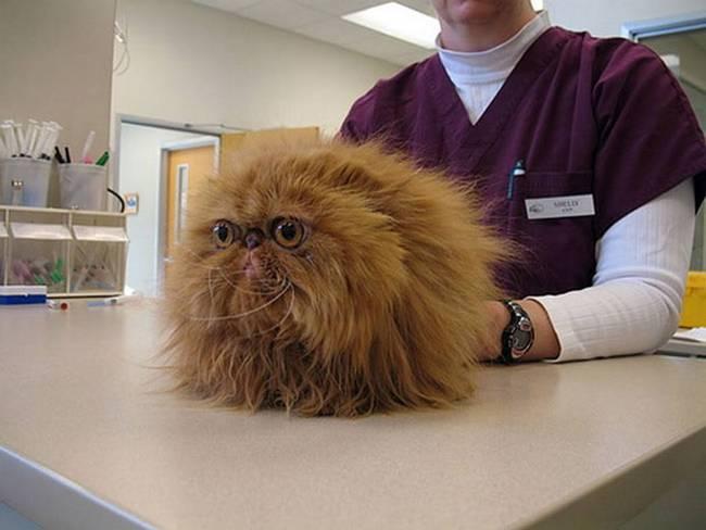 gatos-no-veterinário-10