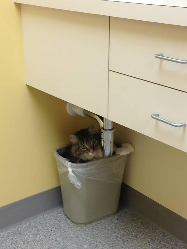 gatos-no-veterinário-13