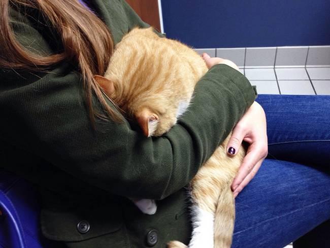 gatos-no-veterinário-17