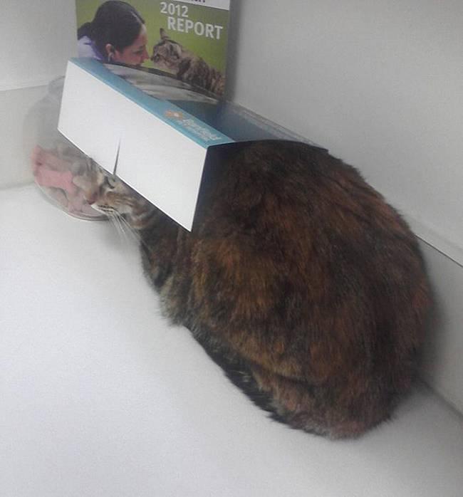 gatos-no-veterinário-18