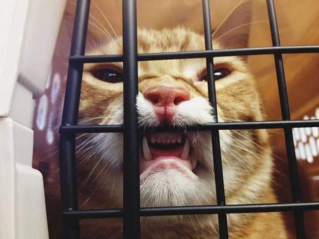 gatos-no-veterinário-19