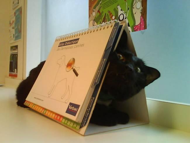gatos-no-veterinário-22