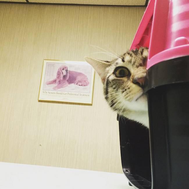 gatos-no-veterinário-24