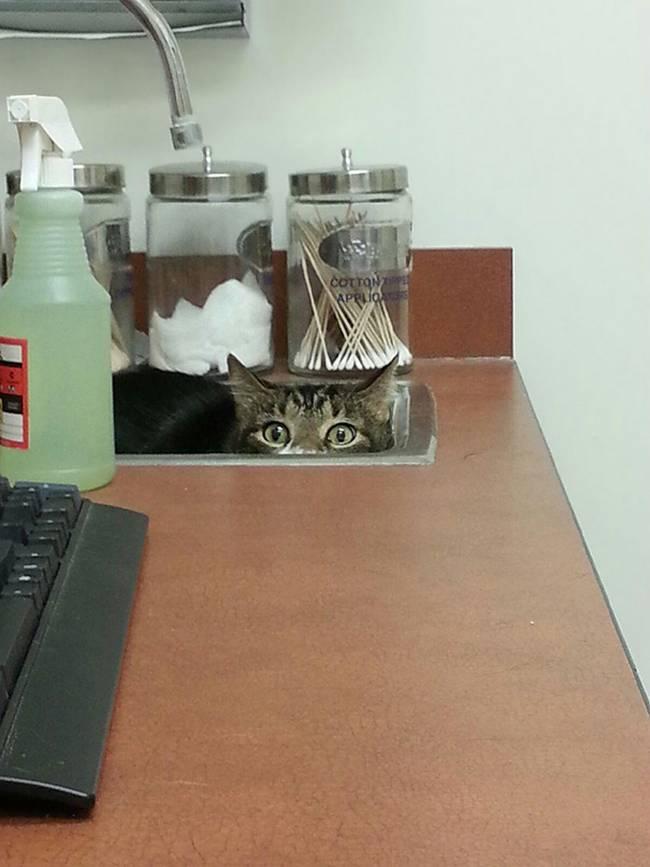 gatos-no-veterinário-25