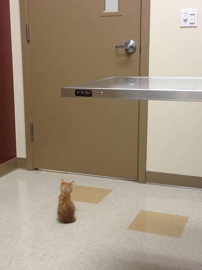 gatos-no-veterinário-4