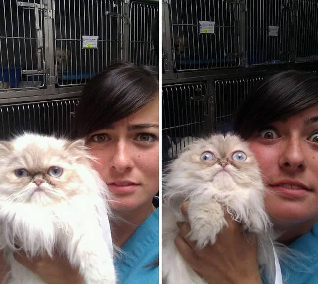 gatos-no-veterinário-6