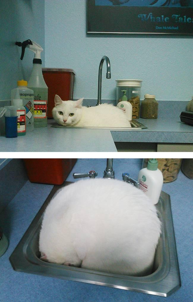 gatos-no-veterinário-7