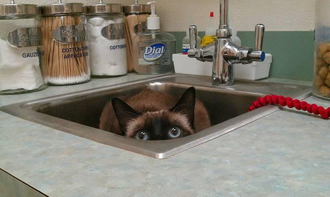 gatos-no-veterinário-8