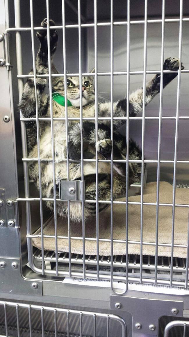 gatos-no-veterinário-9