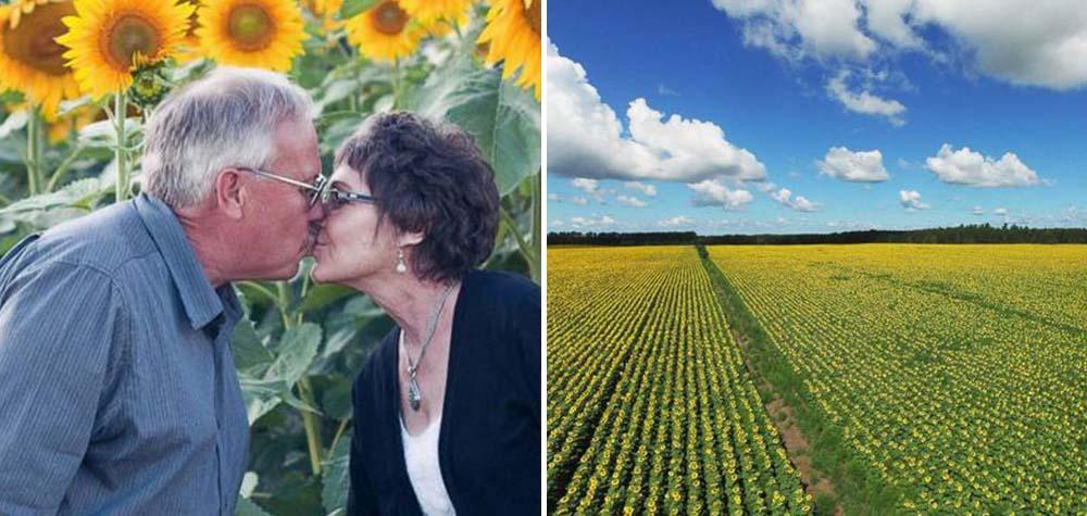 Em homenagem à esposa que morreu de câncer, agricultor planta girassóis para financiar pesquisas sobre a doença