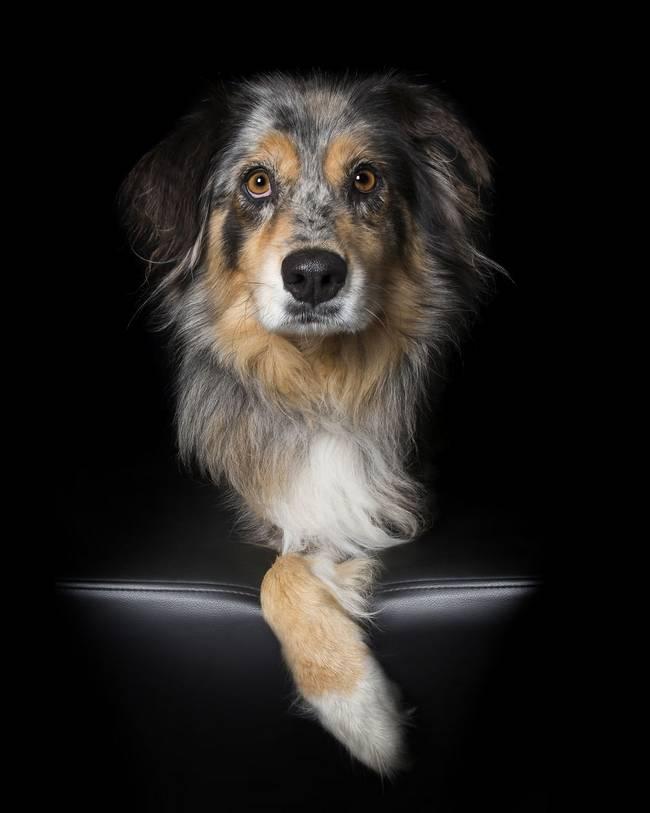 série-fotográfica-de-animais-com-deficiência-12