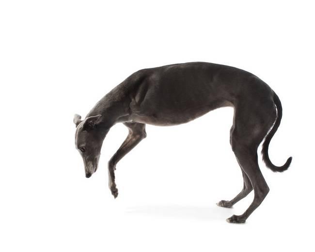 série-fotográfica-de-animais-com-deficiência-21
